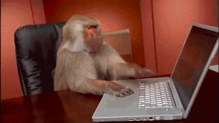 Monkey and computer animated GIF