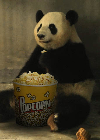 Bear eating popcorn moving picture