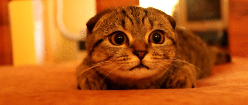 Cat moving head animated GIF