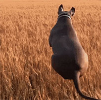 Dog jumps like kangaroo animated GIF