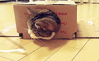 Cat in box moving picture