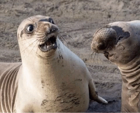 Shocked Seal animated GIF