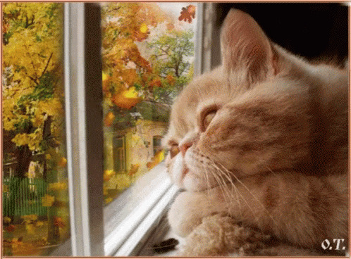 Cat Relax animated GIF