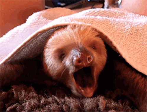 Awww Sloth animated GIF