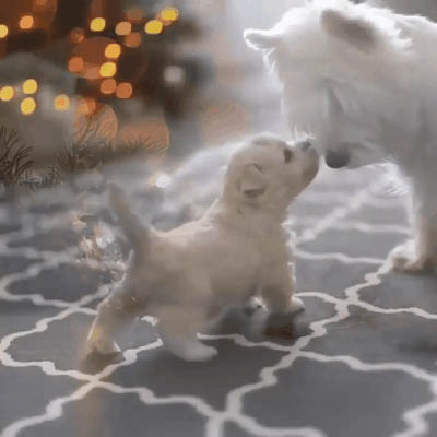 Cute puppy and dog moving picture