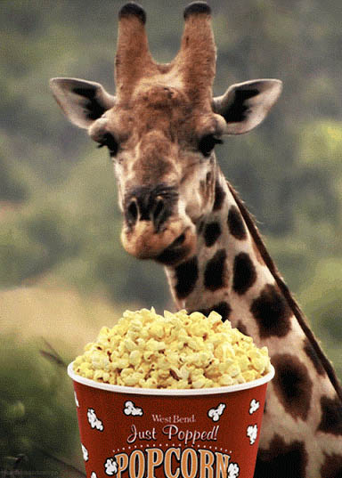 Giraffe eating popcorn animated GIF
