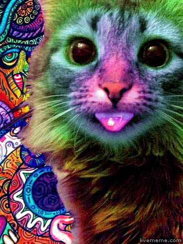Psychedelic cat animated GIF