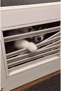 Puppies try to escape animated GIF
