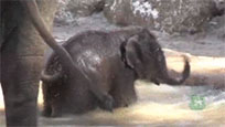 Cute baby elephant moving picture
