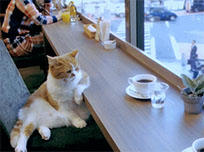 Cat in cafe animated GIF