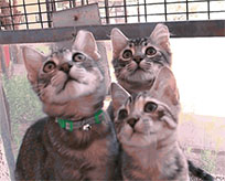 Kittens dancing hip hop animated GIF