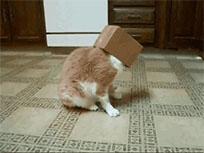 Box cat moving picture