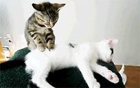 Cat massage moving picture