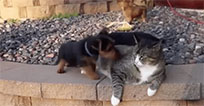 Cat and Puppy moving picture