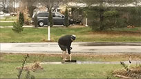 Shoveling water moving picture