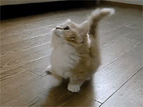 Kitten that watches you animated GIF