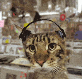 Cat listening to music moving picture