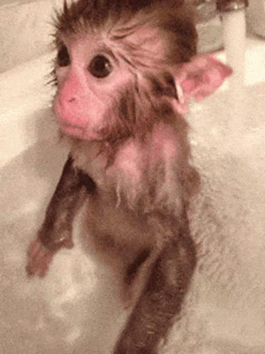 Monkey Bath moving picture
