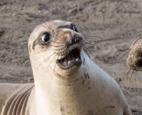 Shocked Seal moving picture