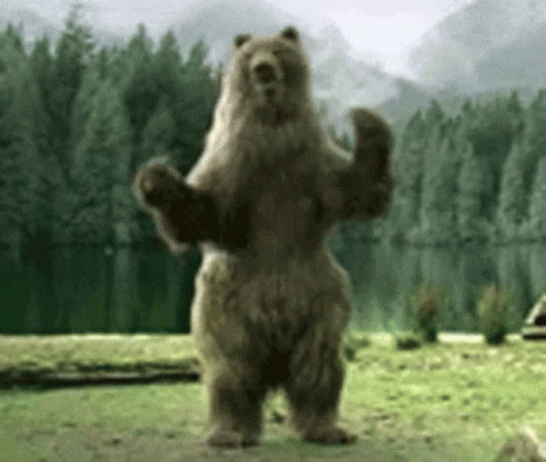 Bear Dancing animated GIF