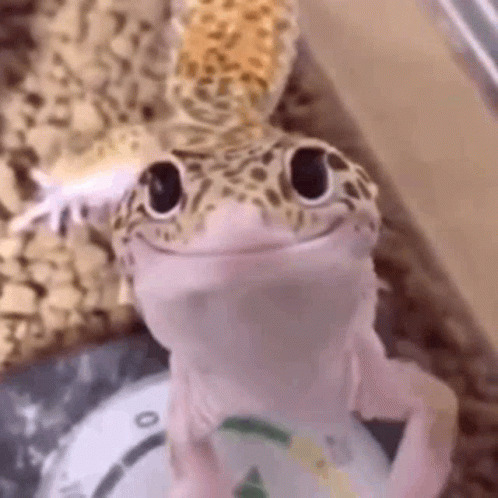 Smiley Gecko free GIF download