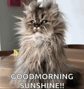 Good Morning Funny Animals animated GIF